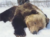 150-Bear-2-200x150