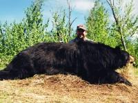 69-Bear-2-200x150