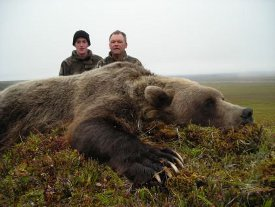 Alaska-177-Brown-Bear