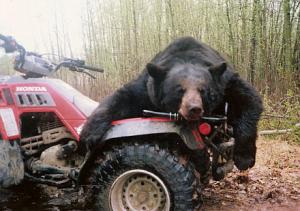 Alberta-178-Bear-Pix-300x211