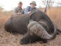 Zimbabwe-206-Buffalo-Pic-1