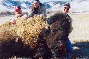 buffalo_05-300x200