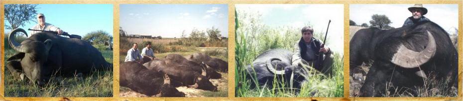 caza-de-bufalo-de-agua
