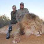 africa lion