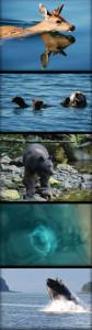 Wildlife-84x300