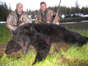 Alaska-194-Bear-June-2012-09-300x225