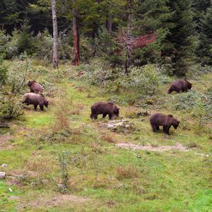 Admiralty-Chichagof-islands-alaska-brown-bear-hunting