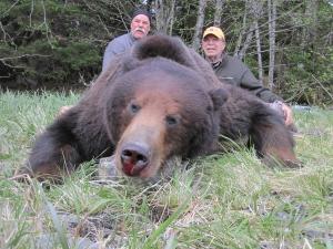 Alaska-156-Bear-2-300x225