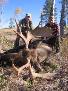 BC-250-Moose-225x300
