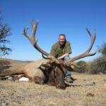 Tule Elk Ron M