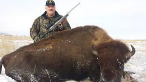 101.Cow-Buffalo-1-300x169