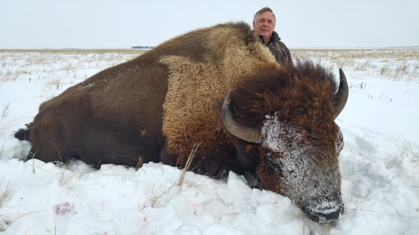 Trophy Bull