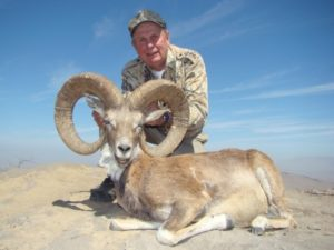 Urial1-300x225