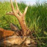 caza en rumania