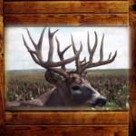 Trophy Whitetail Deer