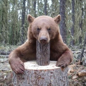 Chocolate-bear