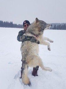 297.alberta-wolf-hunts-6-225x300