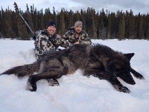 297.alberta-wolf-hunts-9-300x225